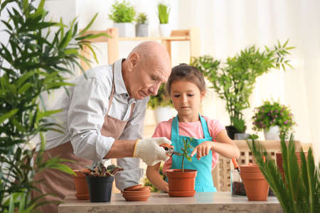Senior man gardening with his granddaughter at home