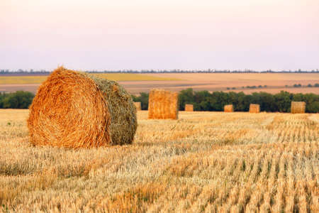 Stubble field at sunset