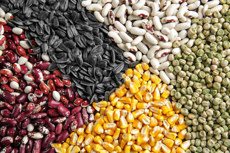 Different types of cereals and legumes, closeup