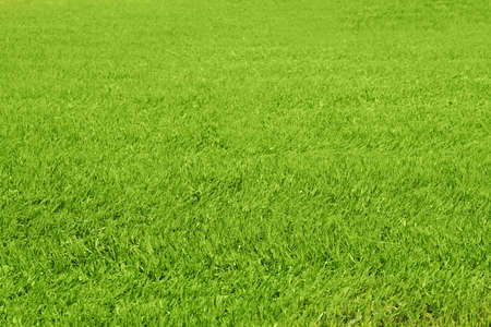 Fresh green grass outdoors