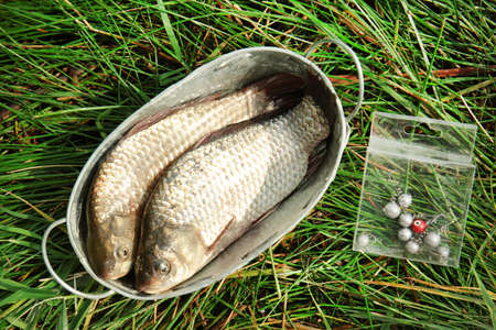 Freshly caught fish in metal basin on grass
