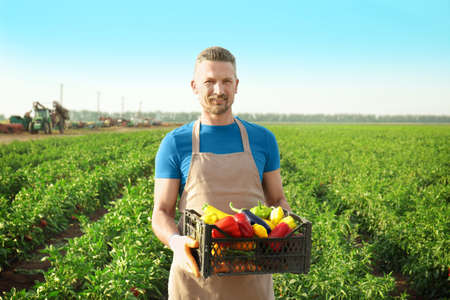 Male farmer holding plastic box with vegetables in field