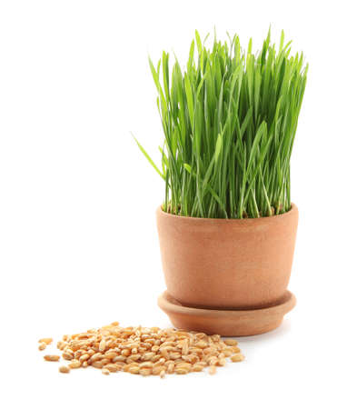 Pot with wheat grass and seeds on white background