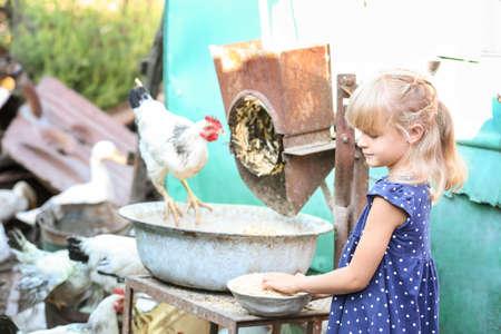 Little girl feeding chickens on farm