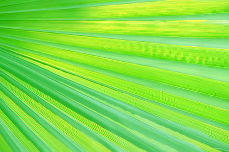 Green tropical leaf, close up Stock Photo