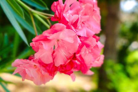 Tropical blooming flowers, closeup