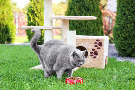 Funny overweight cat eating  in garden Stock Photo
