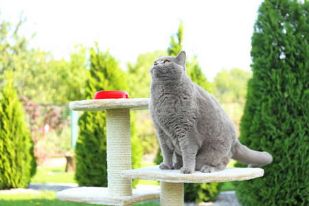 Funny overweight cat sitting on scratching post in garden