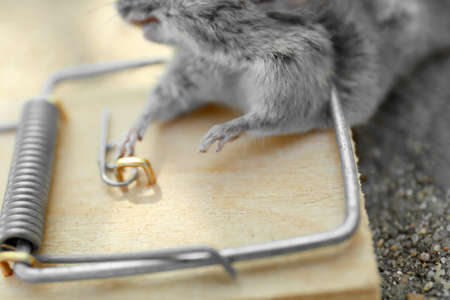 Dead mouse caught in snap trap outdoors, closeup Stock fotó