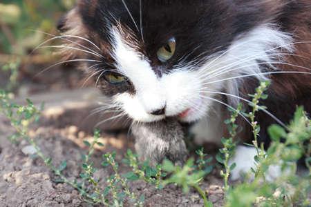 Cat eating mouse outdoors, closeup Stock Photo