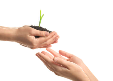 Women's hands with soil and green sprout on white background