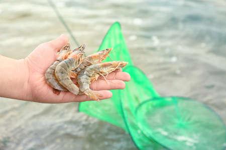 Man holding fresh shrimps, outdoors Foto de archivo
