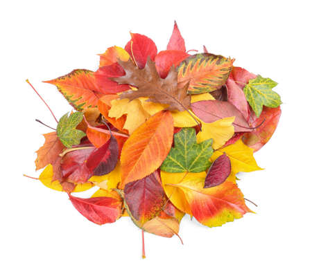 Heap of colorful autumn leaves on white background Stock Photo