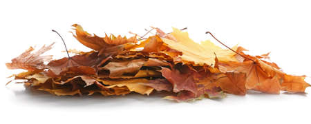 Heap of beautiful autumn leaves on white background