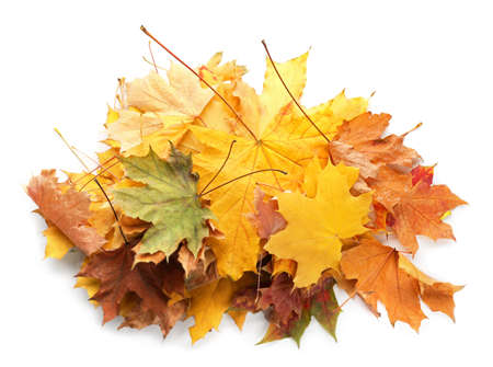Heap of beautiful autumn leaves on white background Stock Photo