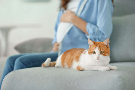 Cute cat and blurred pregnant woman on background