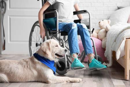 Cute service dog lying on floor near girl in wheelchair indoors