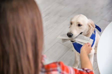 Service dog giving newspaper to woman in wheelchair indoors