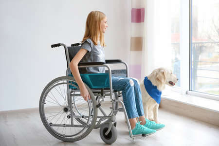 Girl in wheelchair with service dog indoors 版權商用圖片 - 100601453