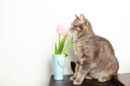 Funny overweight cat sitting near vase with flowers on table Stock Photo