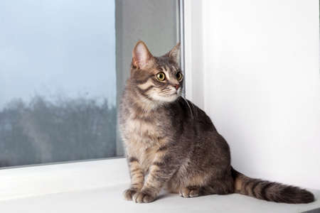 Funny overweight cat sitting on window sill