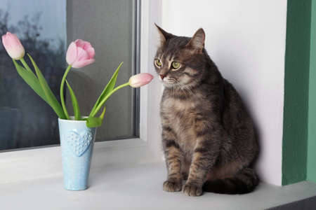 Funny overweight cat sitting near vase with flowers on window sill Stock Photo
