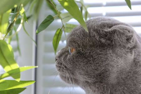 Cute cat resting near window blinds Stock Photo