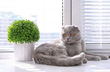 Cute cat resting near window blinds Stockfoto