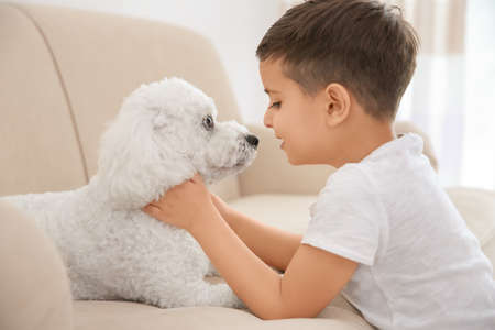 Little boy and bichon frise dog at home Stock Photo