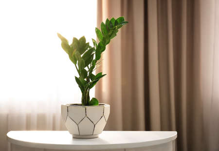 Tropical plant on table against window indoors