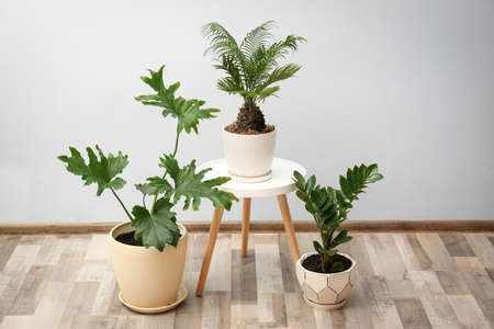 Flowerpots with tropical plants against light wall indoors