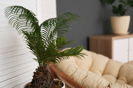 Tropical plant with green leaves indoors