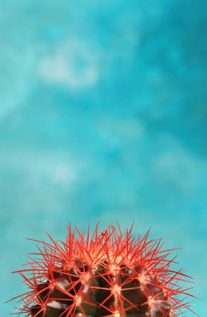 Beautiful cactus on color background Stock Photo