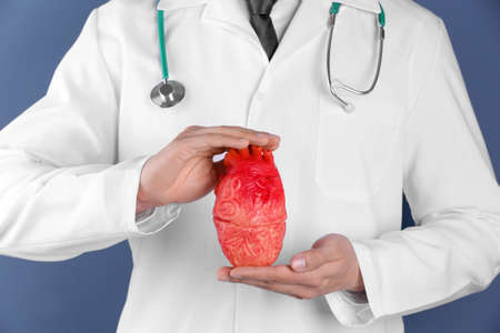 Doctor holding model of heart, closeup. Prevent heart attack