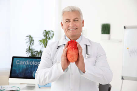 Male doctor holding heart model in clinic. Cardiology center