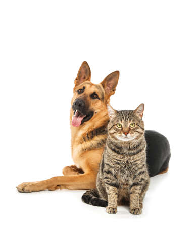 Adorable cat and dog on white background. Animal friendship Standard-Bild