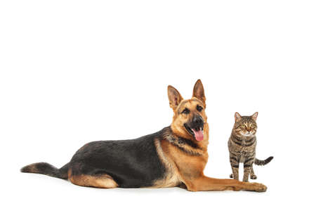 Adorable cat and dog on white background. Animal friendship Archivio Fotografico