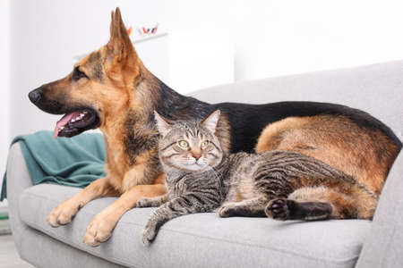 Adorable cat and dog resting together on sofa indoors. Animal friendship Zdjęcie Seryjne
