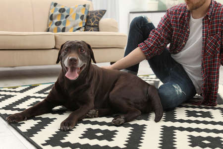 Adorable brown labrador retriever with owner at home