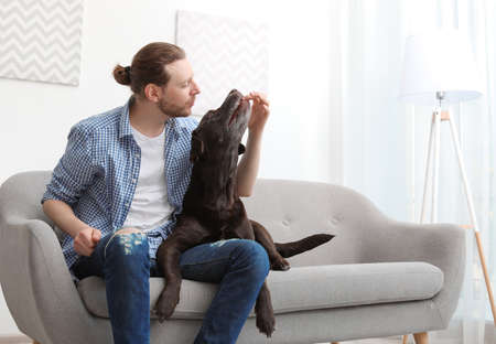 Adorable brown labrador retriever with owner on couch indoors Stock Photo