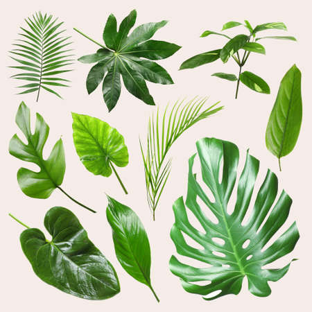 Set of different tropical leaves on light background Stock Photo