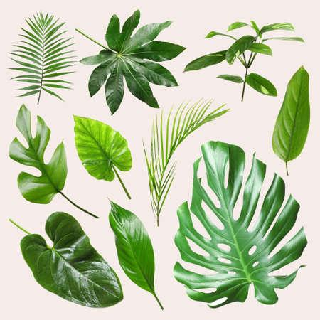Set of different tropical leaves on light background 版權商用圖片 - 105695505