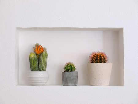 Hermosos cactus diferentes como decoración en nicho. Foto de archivo