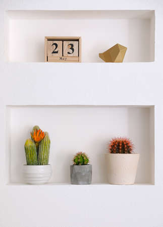 Beautiful different cacti as decoration in niche Stok Fotoğraf