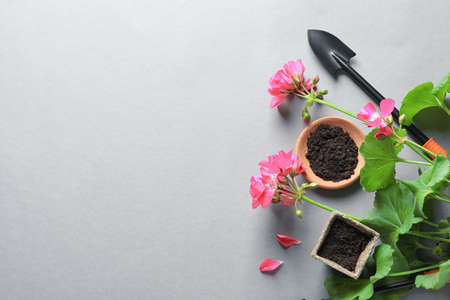 Flat lay composition with gardening tools and plant on grey background