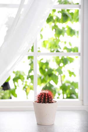 Beautiful cactus in ceramic pot on windowsill