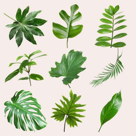 Zbiór różnych tropikalnych liści na jasnym tle