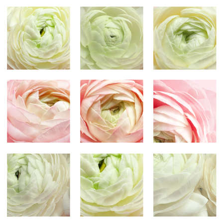 Set with beautiful aromatic ranunculus flowers, closeup