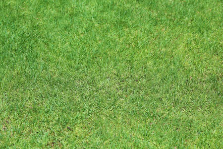 Green lawn in garden on sunny day