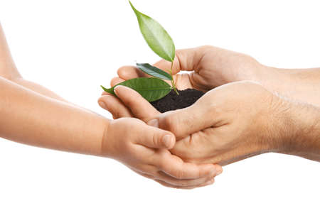 Man passing soil with green plant to his child on white background. Family concept Stock Photo